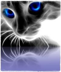 lesioni occhio gatto